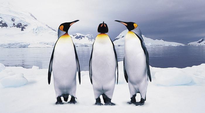 蓬莱阁极地海洋世界 - ecmall
